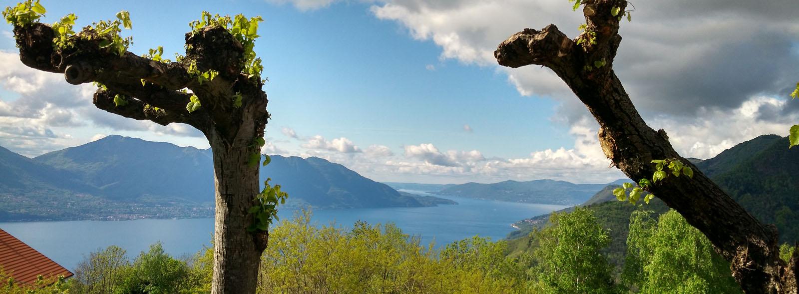 Trarego-Viggiona, Blick auf den See